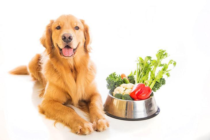 Can-Dogs-Eat-Red-Peppers